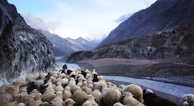 I am the Good Shepherd   Understanding the Gospel